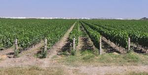 Castel-Vineyard